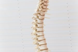The spine of a classroom skeleton.